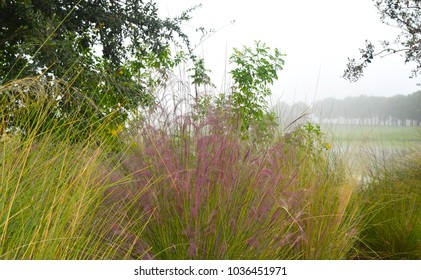 You can barely see the lake in the background hiding behind the tall grass in its different blooming colors.