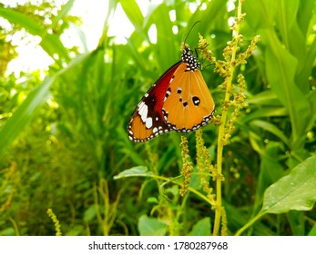 You can enjoy the butterfly  as nature intended with a beautiful unsplash butterfly wallpaper.