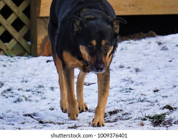 mean dog images, stock photos & vectors | shutterstock