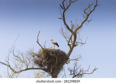 You storks in their nests to care for young