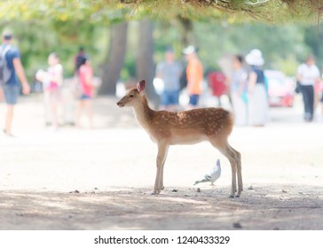 Youg cute deer in Japan in a very bright environment