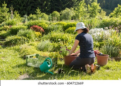 young active woman gardening and planting colorful flowers in summer garden with orchard