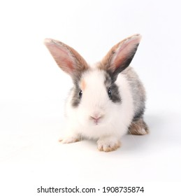 Young adorable bunny sits on white background. Cute baby rabbit for Easter and new born celebration.  2 months pet Isolated on white background.