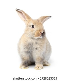Young adorable bunny stand on white background. Cute baby rabbit for Easter and new born celebration.  2 month pet isolate on white background.