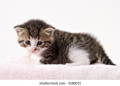 Young adorable kitten posing in my studio