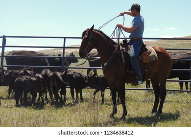 young adult roping a calf at a branding in the sand hills with cows in the background