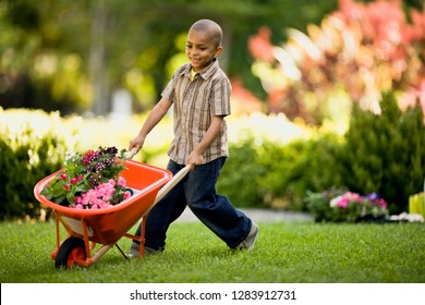 Young African American boy pushes a wheelbarrow around a yard.