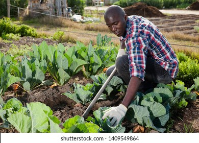 Young African male gardener gardening outside in spring nature