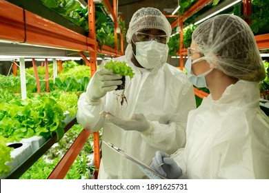 Young African male worker of contemporary vertical farm showing his female colleague sample of new sort of lettuce in small pot