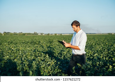Young agronomist holds tablet touch pad computer in the soy field and examining crops before harvesting. Agribusiness concept. agricultural engineer standing in a soy field with a tablet in summer