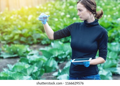 A young agronomist pretty woman holding a soil sample and a tablet. Concept environmentally friendly farm production without nitrates.