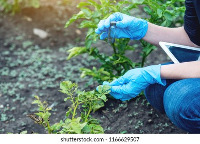 A young agronomist woman holding a soil sample and a tablet. Concept environmentally friendly farm production without nitrates.