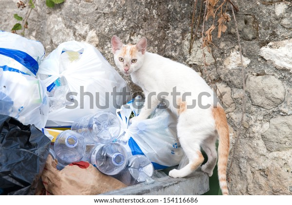 Young alley cat searching through some rubbish