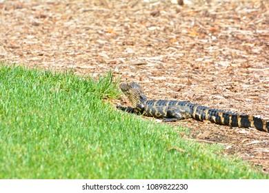 Carolina Golf Images, Stock Photos & Vectors | Shutterstock