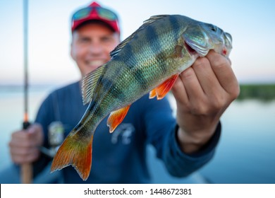 Young amateur angler holds perch fish (Perca fluviatilis) and smiles being on the lake