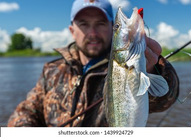 Young amateur angler holds zander fish (Sander lucioperca) in the hand being on the lake