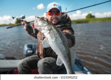 Young amateur angler holds zander fish (Sander lucioperca) in the hand being on the lake in the boat