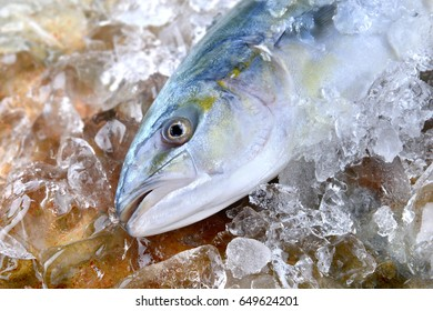 Young amberjack fish or buri fish in Japan is hamachi fish frozen in ice from fishery market.