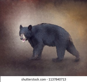 Young American Black Bear digital painting