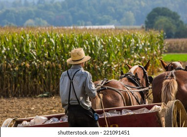 Young amish farmer behind horses sowing a field during the fall season.