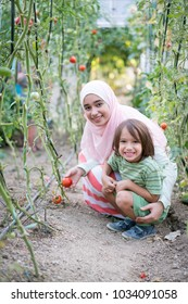Young Arabian Muslim girl with little child working in greenhouse harvesting