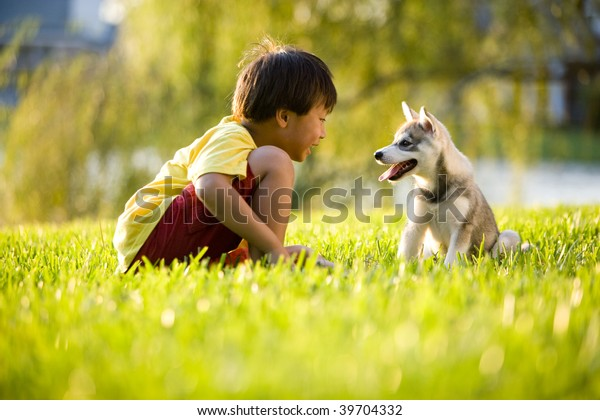 Young Asian boy playing with Alaskan Klee Kai puppy sitting on grass