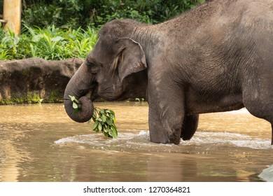 Elephant Ear Food Images Stock Photos Vectors Shutterstock