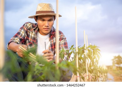 Young Asian farmer holding notebook and checking his plant or vegetable (Chilli tree). Young smart farmer concept