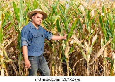Young asian guy farmer standing at the corn farm and checking the corn quality before harvesting