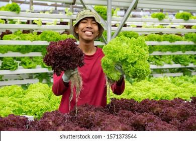 Junge malaysische Bauern lächeln, während sie roten Korallensalat mit Gemüse halten, das mit moderner Anbautechnik gepflanzt wurde. .Konzept für junge Mann Hochschulabsolventen, die in einer modernen ökologischen Landwirtschaft arbeiten.