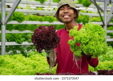 Young Asian Malaysian farmer smile while holding red coral lettuce vegetable planted using modern farming technique. .Concept for young man graduate working in modern organic agriculture farm.