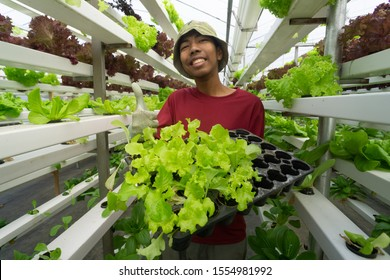 Junge asiatische malaysische Bauern, die auf dem ökologischen modernen, hydroponischen Gemüsebauernhof arbeiten. Konzept für junge Mann, der in einer modernen ökologischen Landwirtschaft arbeitet.