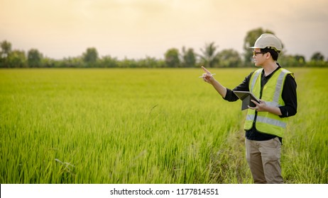 Young Asian male agronomist or agricultural engineer observing green rice field with digital tablet and pen for the agronomy research. Agriculture and technology concepts