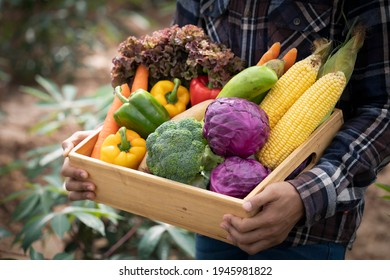 Young Asian man farmer with freshly picked vegetables in basket. Hand holding wooden box with vegetables in field. Fresh Organic Vegetables from local producers ready for transport. - Shutterstock ID 1945981822