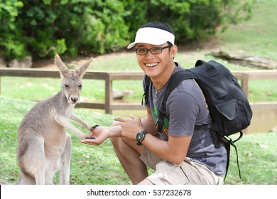 Young asian man wearing glasses is feeding Kangaroo in a park. Exchange student in Australia.