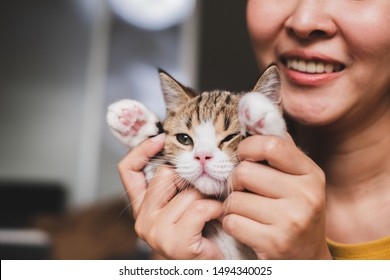 Young Asian woman holding and playing with her cute kitten cat with lovely moment, pet and human concept. scottish