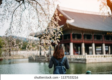Young asian woman traveler with backpack traveling into the Gyeongbokgung Palace  with cherry blossom or sakura in background at Seoul city, South Korea.