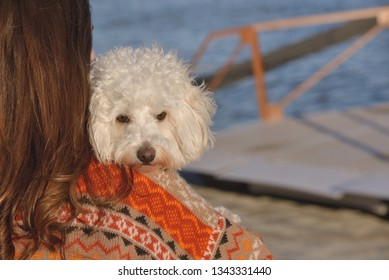 Young attractive girl with her maltese dog at a beach