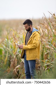 Young attractive man with beard holding tablet and checking corn plants in field in early autumn