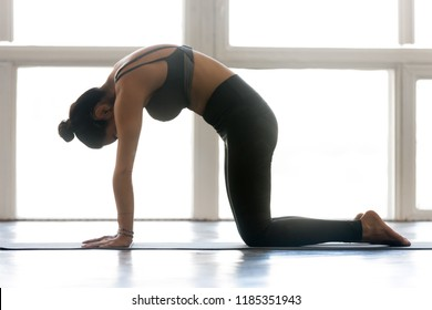Young attractive woman practicing yoga, doing asana paired with Cow Pose on the inhale, Cat exercise, Marjaryasana pose, working out, wearing sportswear, grey pants, top, indoor full length, studio