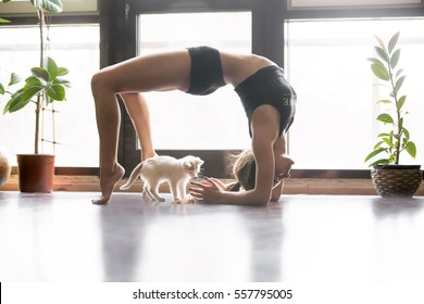 Young attractive woman practicing yoga, stretching in Elbow Bridge exercise, Urdhva Dhanurasana pose, working out, wearing sportswear, black tank top, shorts, indoor full length, home interior, cat