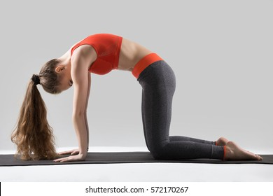 Young attractive woman practicing yoga, standing in asana paired with Cow Pose on inhale exercise, Cat, Marjaryasana pose, working out, wearing sportswear, red top, pants, full length, grey studio