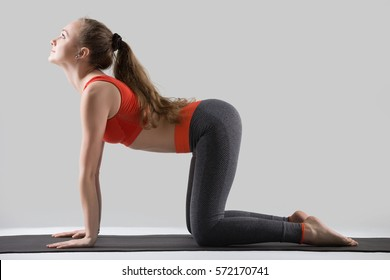 Young attractive woman practicing yoga, standing in asana paired with Cat Pose on exhale, Bitilasana exercise, Cow pose, working out, wearing sportswear, red tank top, pants, full length, grey studio