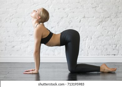 Young attractive woman practicing yoga, doing asana paired with Cat Pose on the exhale, Cow, Bitilasana pose, working out, wearing sportswear, black top, pants, indoor full length, studio background
