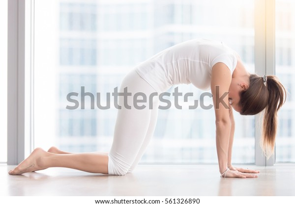 Young attractive woman practicing yoga, stretching in asana paired with Cow Pose on the inhale exercise, Cat, Marjaryasana pose, working out, wearing sportswear, white t-shirt, pants, full length