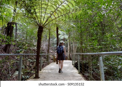 Young Australian woman walking on a footpath in the rain forest of Jamison Valley at the Blue Mountains in New South Wales, Australia.