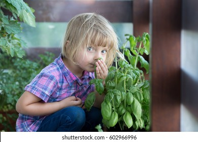 young baby caucasian blonde girl smell basil leaf at her family urban vegetable garden