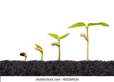 Young baby plants growing in germination sequence on fertile soil with natural green background