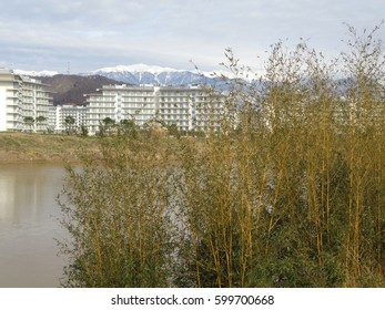 Young bamboo thicket at pond shore, hotel buildings and snowy mountains on horizon