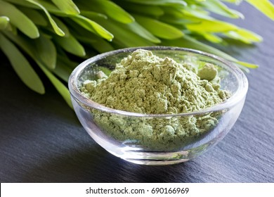 Young barley grass with green barley grass powder on a dark background